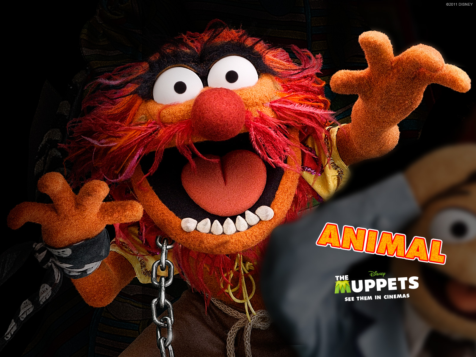 The muppets see it in cinemas february 10 - Animal muppet images ...